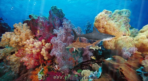 Scenery wallpaper fond d 39 cran anim gratuit de requin for Fond ecran gratuit aquarium