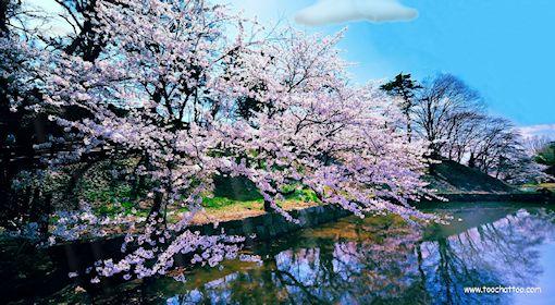 fond d'écran animé le printemps et les fleurs