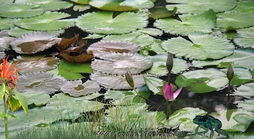 Paysages en fond d 39 cran anim gratuit for Photo pour arriere plan ordinateur
