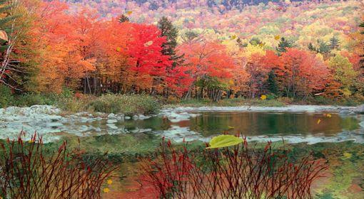 Fond d'écran animé Feuilles d'automne