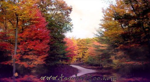 Fond d'écran animé Forêt d'automne