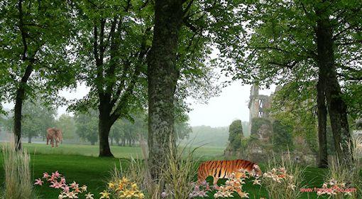 Fond d 39 ecran anim chats chiens l phants mamouths for Fond ecran gratuit rigolo