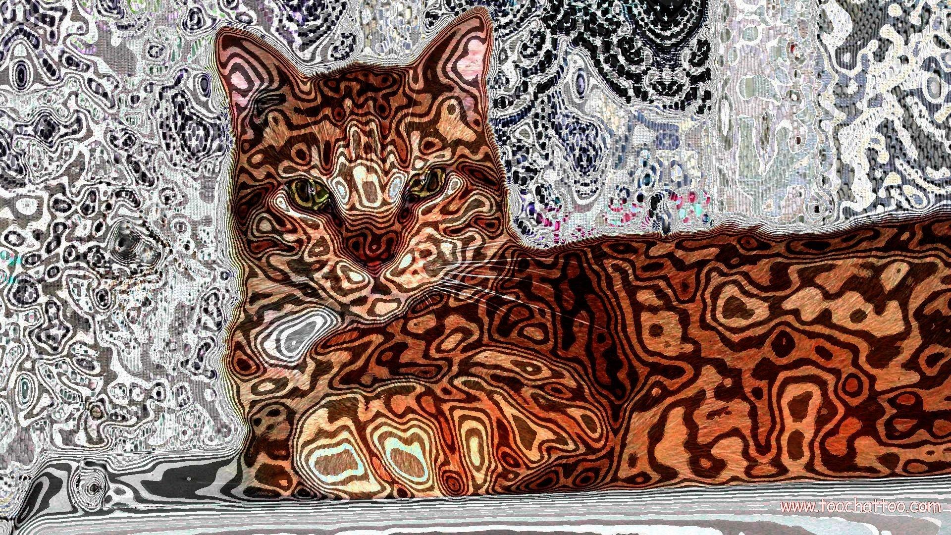 Fond ecran image et photo de chat et de f lin 1920x1080 - Telecharger image de chat gratuit ...