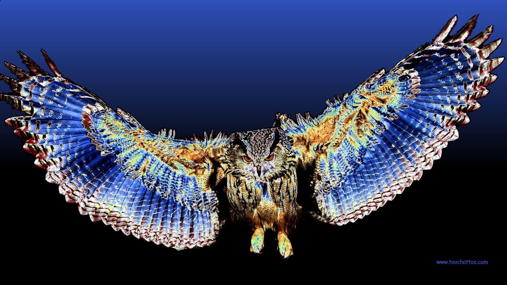 Fond ecran gratuit d 39 oiseaux et rapaces for Photo de fond ecran
