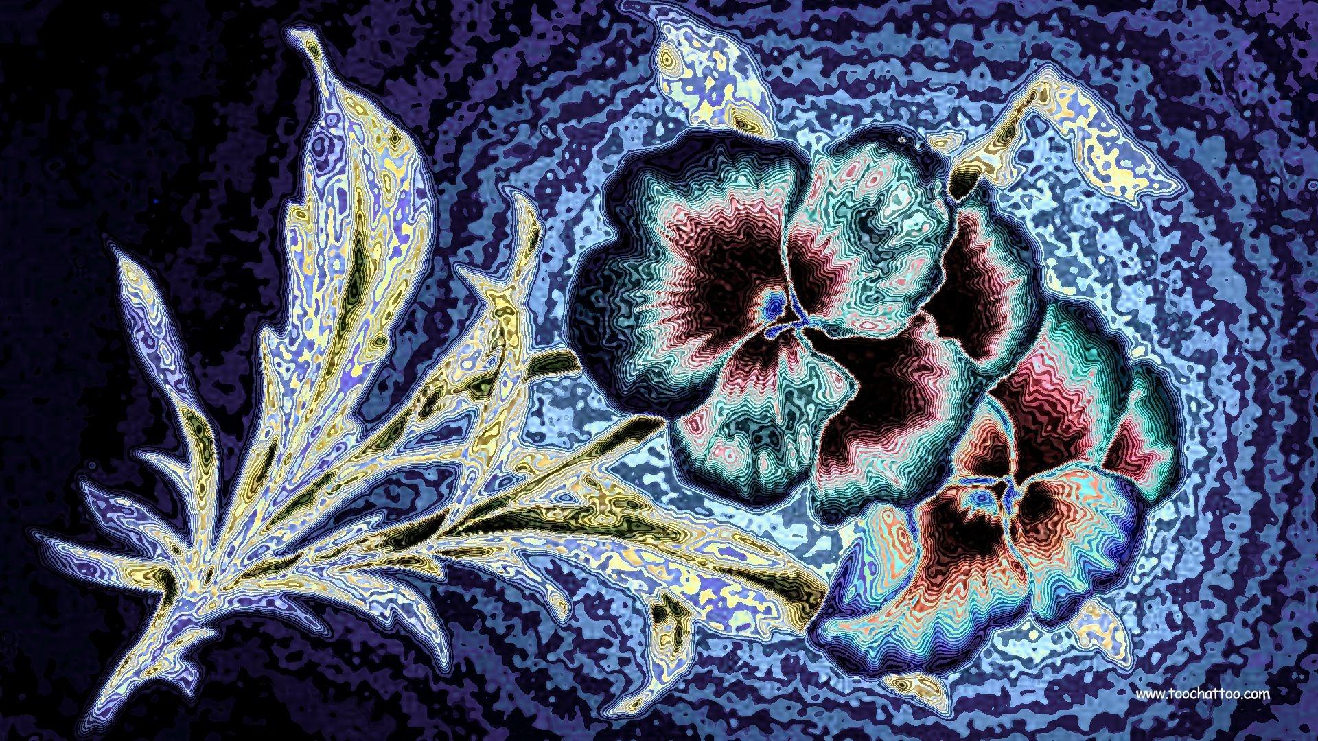 Fond D Ecran Nature Fleur Et Paysage Wallpaper 1920x1080
