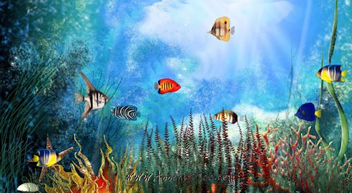Screensaver aquarium gratuit t l charger for Fond ecran aquarium