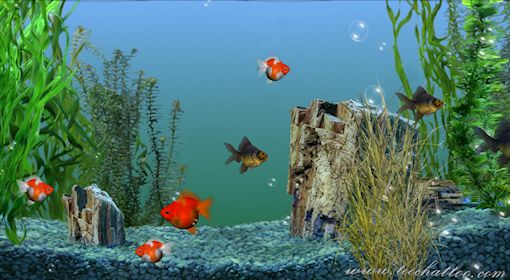 Photo collection tlcharger fond decran aquarium for Fond ecran aquarium